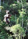 Ziplining in Paradise