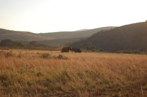 africa2009 335